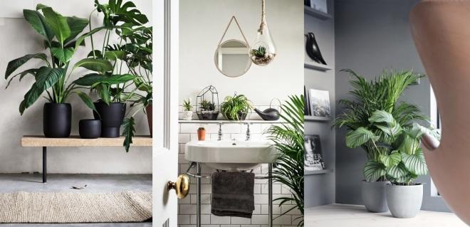 Come-creare-un-oasi-verde-con-piante-a-casa-7-idee-per-decorare-interno-ddarcart-00