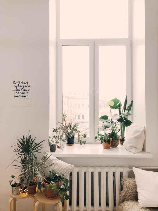 plantsblog1